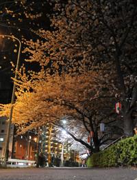 神田川:早稲田付近