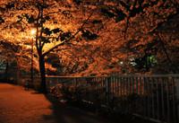神田川:小滝橋付近