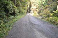 荒れた舗装路