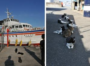網地島ラインフェリーと猫の集会