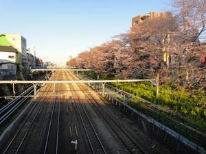 桜川橋にて