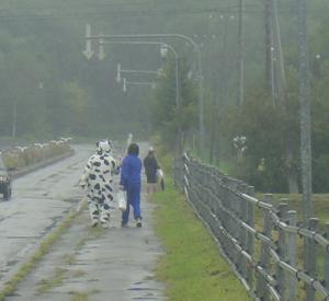 牛が歩いてた