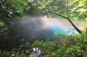 木漏れ日と朝靄の青池