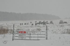 南ゲート付近の柵