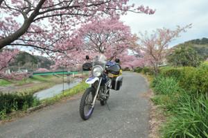 みなみの桜の土手