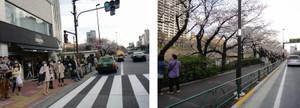お堀沿いの桜