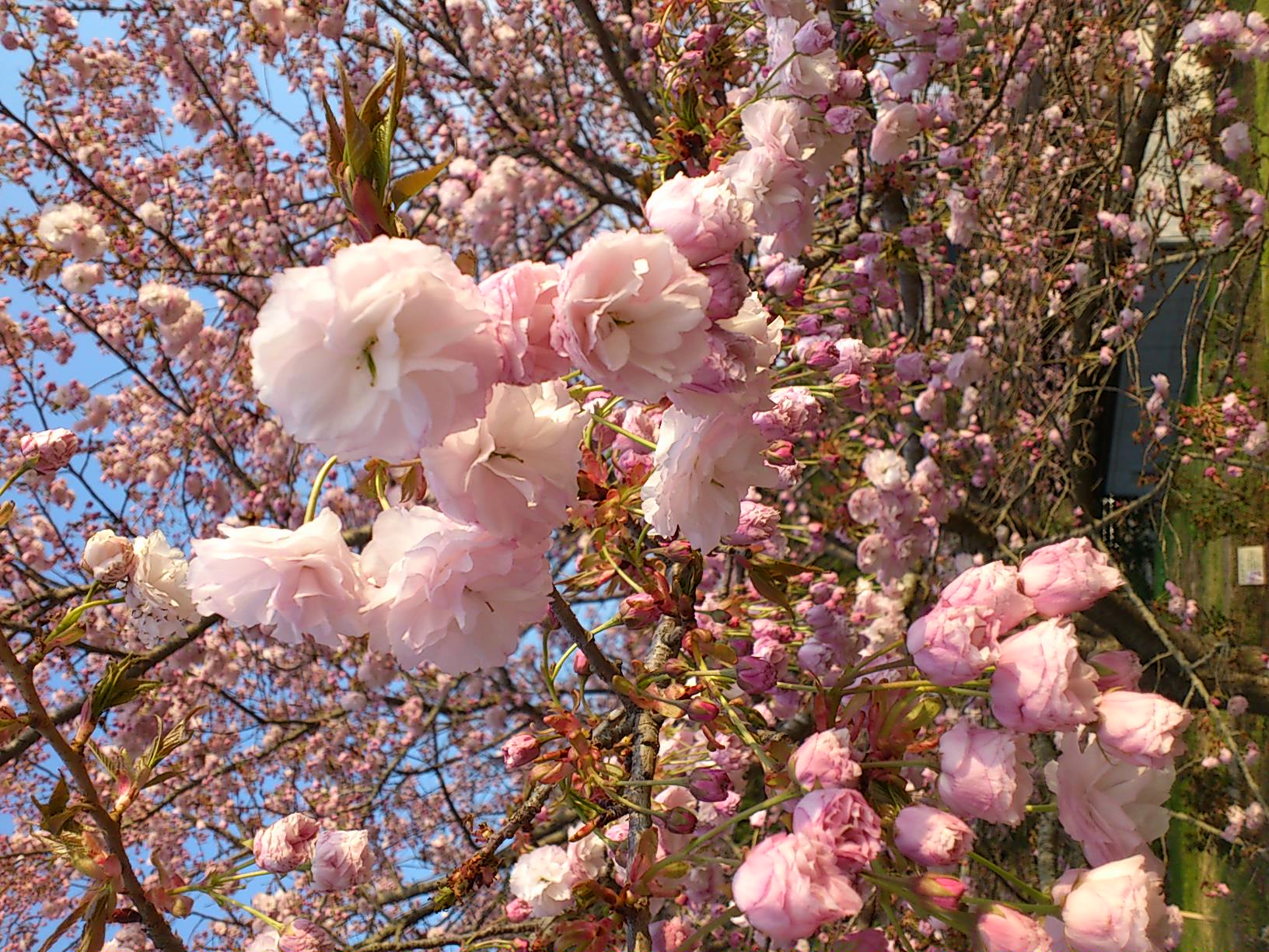 茨城の辰ノ口親水公園に来ています